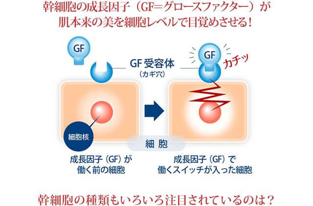 リフトマキシマイザーヒト幹細胞培養液リガンドレセプター