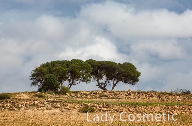 間伐地帯に力強くそびえ立つアルガンツリー